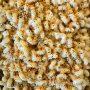 Creamy Garlic Macaroni and Cheese